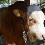 taur_agraria2013_cluj-napoca_food_news_romania