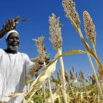 exporturi_africa_economica_food_news_romania
