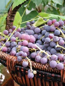 struguri_grape-basket-food_news_romania