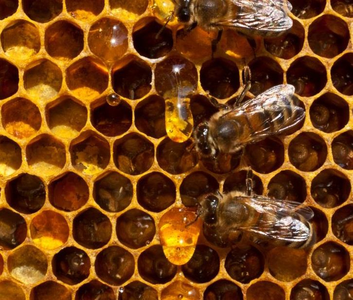 honey_miere_production_EU_romania