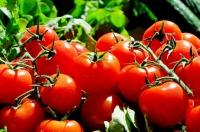 Primele roșii românești au ajuns în piețe si hypermarketuri