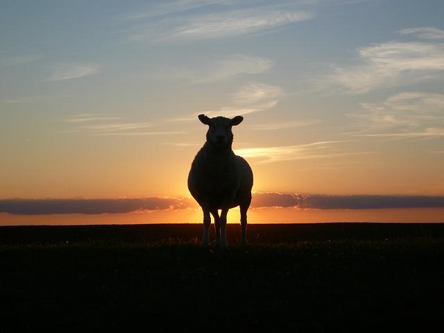 ec35b5062ce91c72d252440dee4a5b97e77eead01cb7124593_640_Sheep